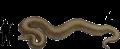 titanoboacerrejonensis.png